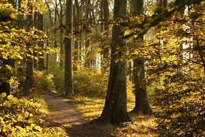экскурсия в Венский лес