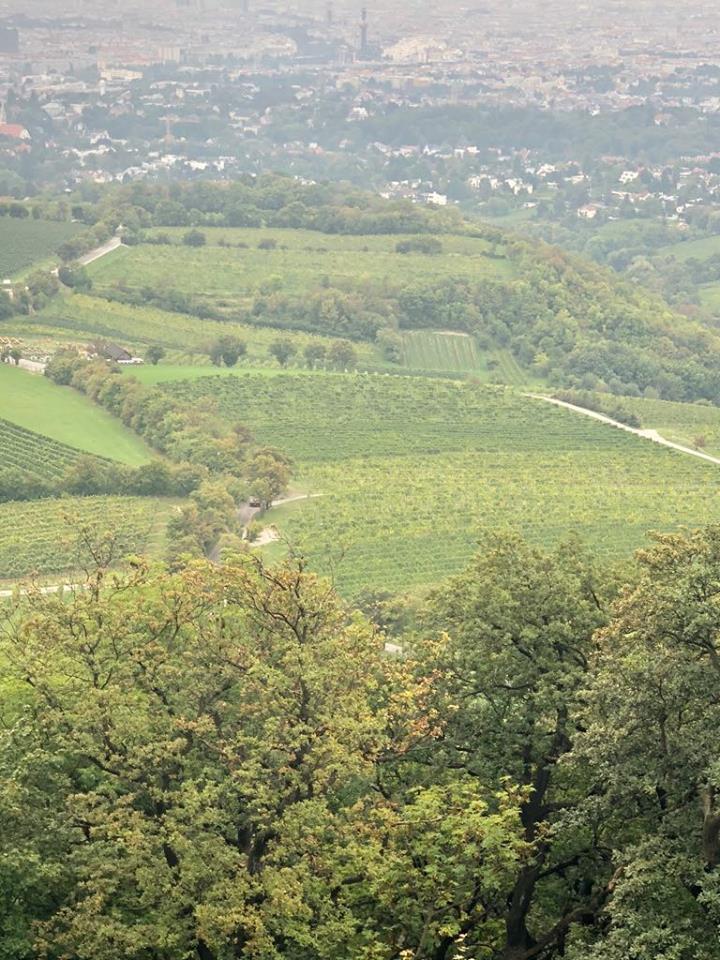 В границите на Виена има общо 7 000 декара лозя